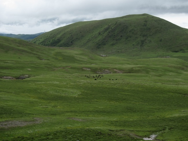 Tagong Grasslands