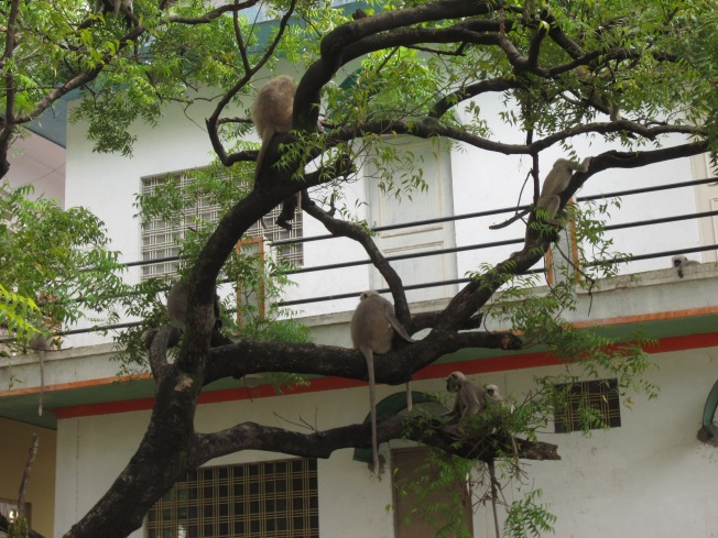 Does your yoga class include monkeys?